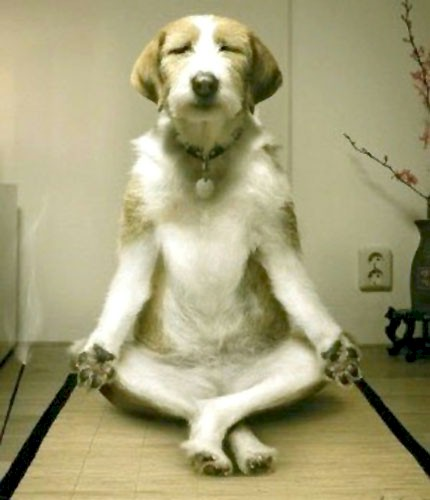 Inner Peace - Dog Meditating